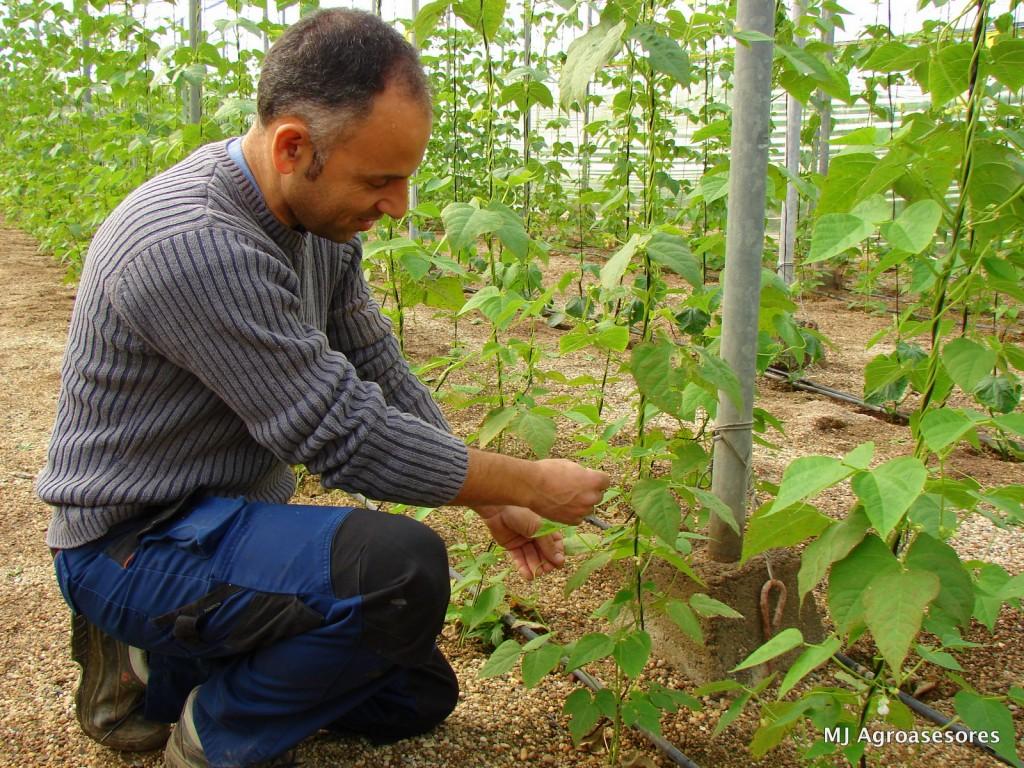 agriculturaecologica2_2