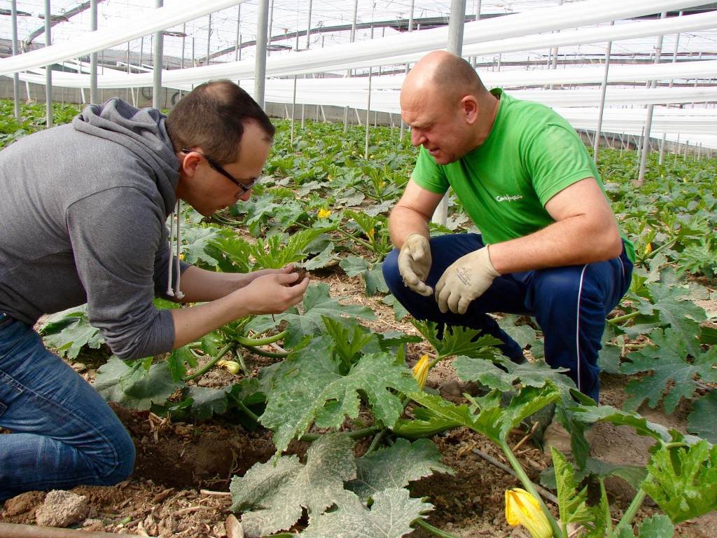 técnico agricultura ecológica almería