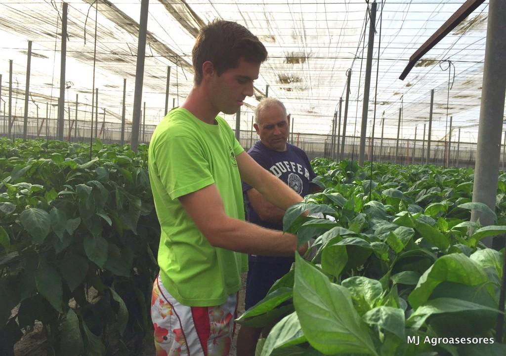 agricultura ecológica de Almería